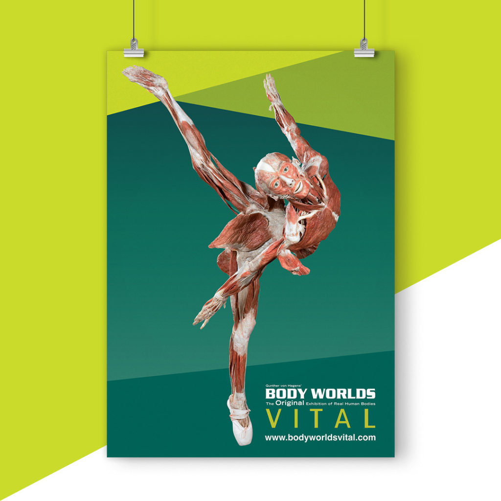Body Worlds Vital – Melbourne